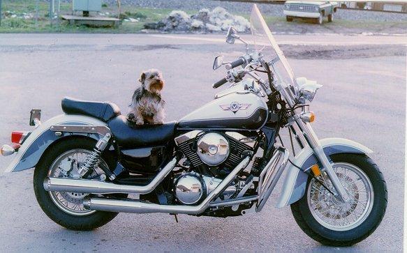 MAX THE WONDER DOG!!